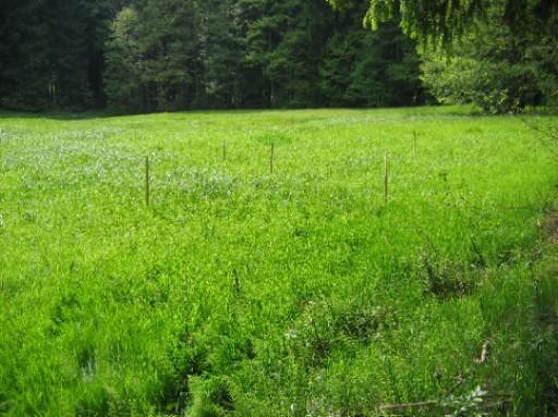 Geplanter Standort eines Tümpels in der westlichen Taubenwiese